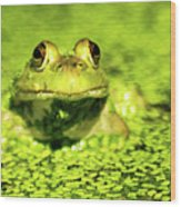A Frogs Day Wood Print