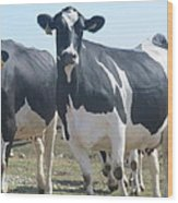 A Full Grown Holstein Cow Wood Print
