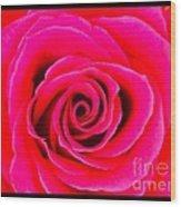A Fuschia Pink Rose Wood Print