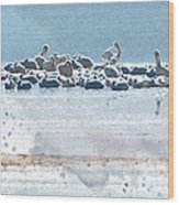 A Gathering Of Pelicans Wood Print