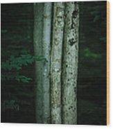 A Gathering Wood Print