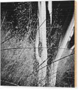 A Gentle Breeze Wood Print by Gerlinde Keating - Galleria GK Keating Associates Inc