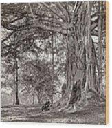 A Gentleman Sitting Beneath A Large Native Tree In British Ceylon Wood Print