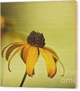 A Gift From August Wood Print by Lois Bryan