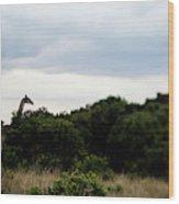 A Giraffe Giraffa Camelopardalis Among Wood Print