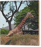 A Giraffe Rests In Honolulu Wood Print