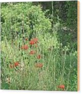 A Glimpse Of Poppies Wood Print