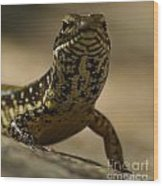 A Golden Skink Wood Print
