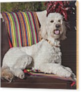 A Goldendoodle Lying On A Garden Bench Wood Print