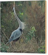 A Great Blue Heron Exhibits Greeting Wood Print