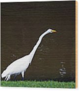 A Great Egret On Hilton Head Island Wood Print
