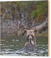 A Grizzly Cub Fishing Wood Print