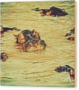 A Group Of Hippos In A River. Tanzania Wood Print