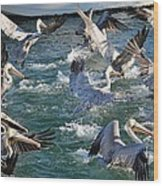 A Group Of Pelicans Wood Print