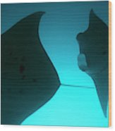 A Group Of Silhouetted Manta Rays Wood Print