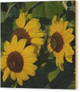 A Group Of Sunflowers Wood Print