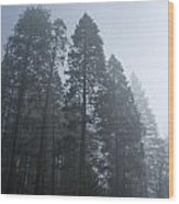 A Grove Of Pine Trees In Yosemite Valley Wood Print
