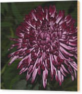 A Happy Birthday Wish With An Elegant Maroon And Pink Mum Wood Print