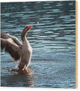 A Happy Goose Wood Print