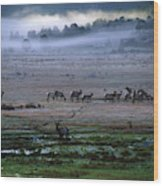 A Heard Of Elk Graze In A Misty Meadow Wood Print