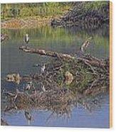 A Hedge Of Heron Wood Print