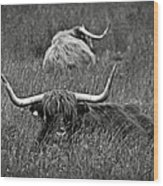 A Highland Cattle In The Scottish Highlands Wood Print