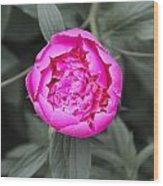 A Hint Of Pink In The Garden Wood Print