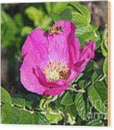 A Hornet And Beach Rose Wood Print