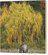 A Horse And A Willow Tree Wood Print