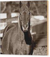 A Horse Is A Horse II Wood Print