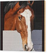 A Horse Is A Horse Of Course By Diana Sainz Wood Print