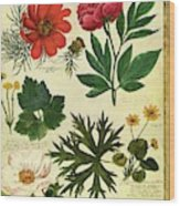 A House And Garden Cover Of Flowers Wood Print