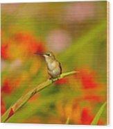 A Humming Bird Perched Wood Print