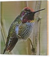 A Hummingbird Rainbow Wood Print
