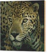 A Jaguar On The Prowl Wood Print by Steve Winter