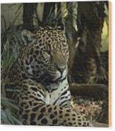 A Jaguar's Gaze Wood Print