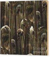 A Jungle Of Ferns Wood Print