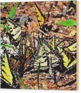 A Kaleidoscope Of Butterflies Wood Print