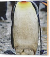 A King Penguin Holds Its Egg Wood Print
