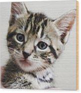 A Kittens Helping Hand Wood Print