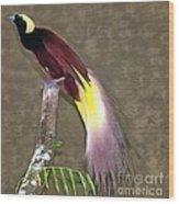 A Large Bird Of Paradise Wood Print