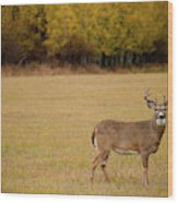 A Large Whitetail Buck Stairs Wood Print