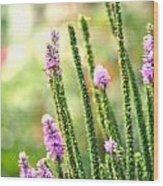A Lavender Garden Wood Print