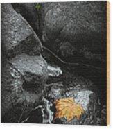 A Leaf On The Rocks Wood Print