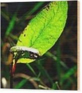 A Leaf... Wood Print