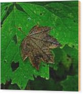 A Leaf Upon A Leaf Wood Print