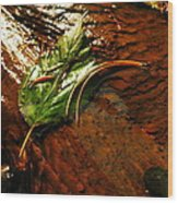 A Leaf Washed Over Wood Print by Jeff Swan