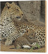A Leopard Cub With Her Mother Wood Print