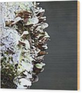 A Lichen Abstract 2013 Wood Print