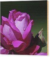 A Light Blue Rose  Wood Print